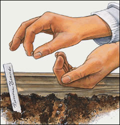 garden-planting